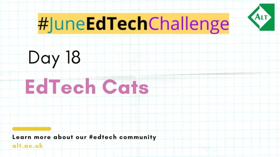Day 18: EdTech Cats